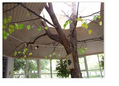 linden boom in entré ter nagedachtenis aan Astrid Lindgren. De bezoekers knipten een eigen lindenblad uit en schreven er een boodschap aan Astrid op. (helaas werd de boom na een jaar weg-gehaald)
